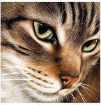Gyémántfestés szett, titokzatos macska, 20x20cm